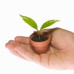 芽が噴き出るように育てよう